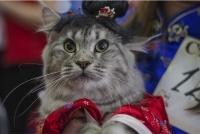 Выставка кошек «Весенний карнавал 2015» в Иваново