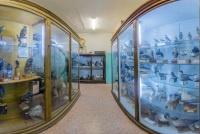 Зоологический музей ИвГУ, 4 корпус